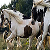 Cute spotted horses slide puzzle