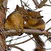 Cute squirrels slide puzzle