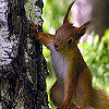 Cute tired squirrels slide puzzle
