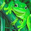 Cute water frogs puzzle