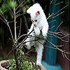 Cutie cat slide puzzle
