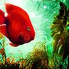 Deep orange fish slide puzzle