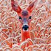 Deer in the field slide puzzle