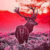 Deer in the sunrise slide puzzle