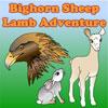 Desert Bighorn Sheep Lamb Adventure