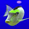 Dizzy fish puzzle