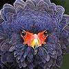 Dizzy fluffy bird slide puzzle