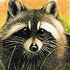 Dizzy raccoon slide puzzle
