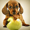 Dog and apple slide puzzle