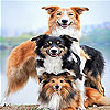 Dog family slide puzzle