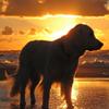 Dog in sunrise Puzzle