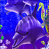 Dolphins  and seahorse puzzle