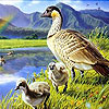 Ducks and rainbow slide puzzle