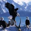 Eagle Slide Puzzle