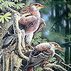 Elegant forest birds puzzle