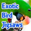 Exotic Bird Jigsaw Tournament