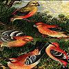 Fantastic birds puzzle