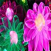 Fantastic flower garden puzzle