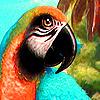 Fantastic red parrots puzzle