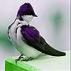 Farm sparrow slide puzzle