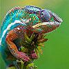 Fast colorful chameleon slide puzzle