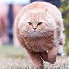 Fat cat slide puzzle