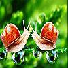 Fighter snails slide  puzzle