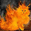 Flame cat slide puzzle