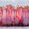 Flamingo family slide puzzle