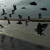 Flock of Birds Jigsaw Puzzle