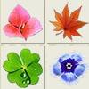 Flower Matching