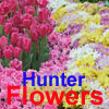 Flowers Hunter