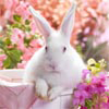 Flowers Rabbit
