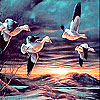 Flying birds at night slide puzzle