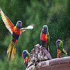 Flying birds slide puzzle