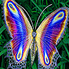 Flying colored wings slide puzzle