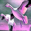 Flying goose family puzzle