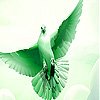 Flying green dove slide puzzle