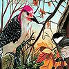 Forest  birds nest puzzle