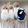 Four cute bird slide puzzle