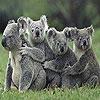 Four koala slide puzzle