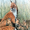 Fox family in the nature puzzle