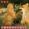 Fox – Hidden Numbers