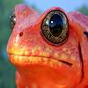 Frog Slide Puzzle