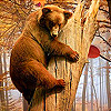 Funky bear in woods slide puzzle