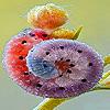 Funky caterpillar puzzle