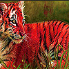 Funky tiger cub puzzle
