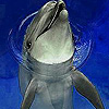 Funny dolphin in the pool slide puzzle