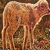 Furry lamb slide puzzle
