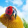 Gemma and ladybug slide puzzle